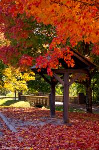 fall in Winston Salem, NC