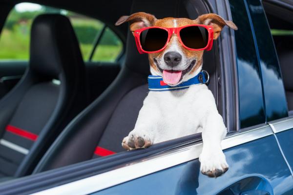 Dog friendly vehicles in Winston-Salem