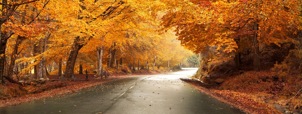 Autumn road in Winston-Salem