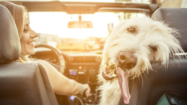 Used cars for dog owners in Winston-Salem